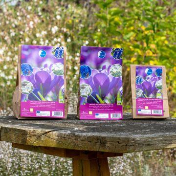 Mélange de bulbes bio jardin sauvage