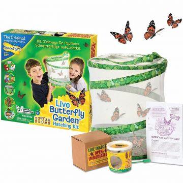 Kit d'élevage de papillons