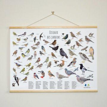 Tableau oiseaux des jardins - Elwin van der Kolk