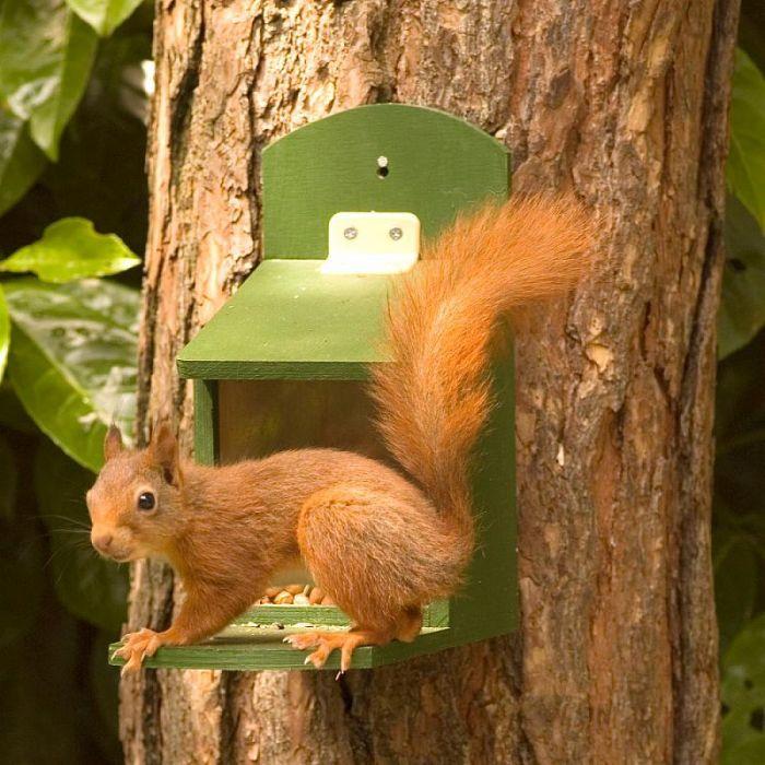 Coffret pour écureuils