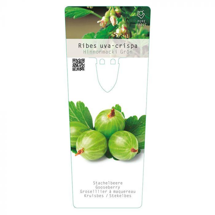 Groseillier vert