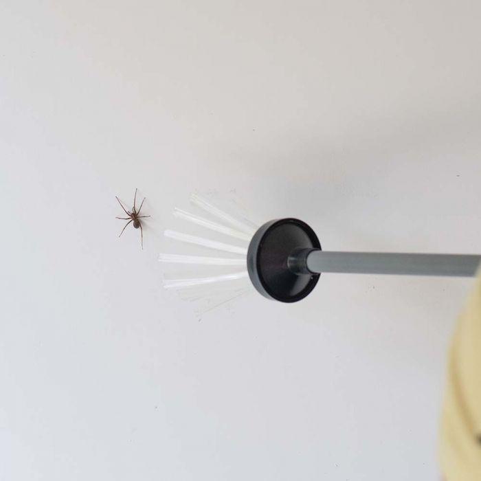 Attrape insectes Brosse