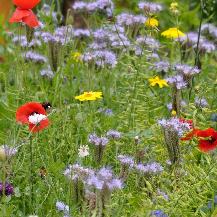 Mélange de fleurs pour papillons