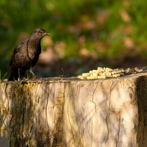Friandises nutritives avec cacahuètes 1 kg