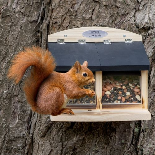Mangeoire pour écureuils Galiano