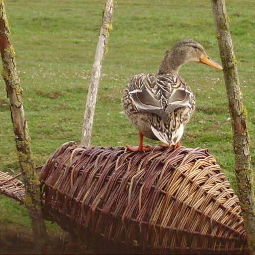 Panier rond pour canards