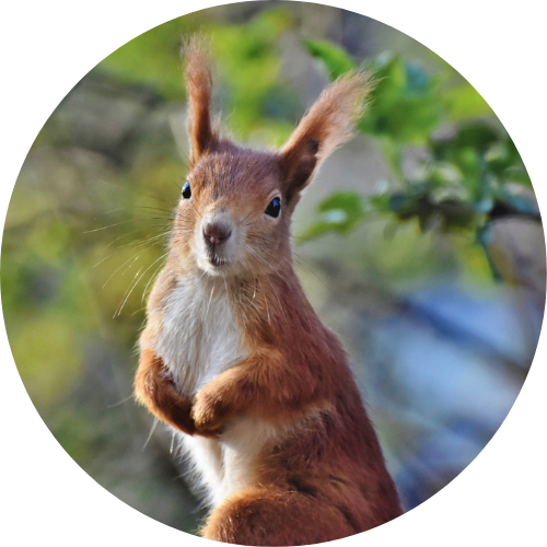 Créez votre coffret pour écureuil