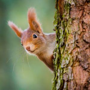 Cinq choses à savoir sur les écureuils
