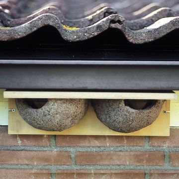 Nid artificiel pour hirondelles de fenêtre double