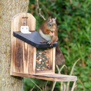 Victoria Squirrel Feeder
