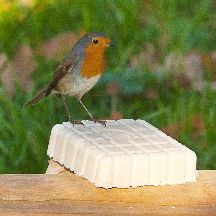 Peanut Cake Square Gourmet Robin