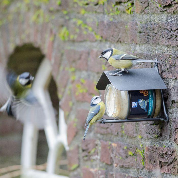 Beurre de cacahuètes pour oiseaux de jardin - original