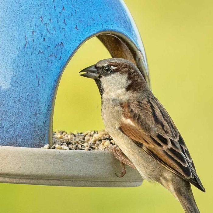Mélange gourmand pour petits oiseaux