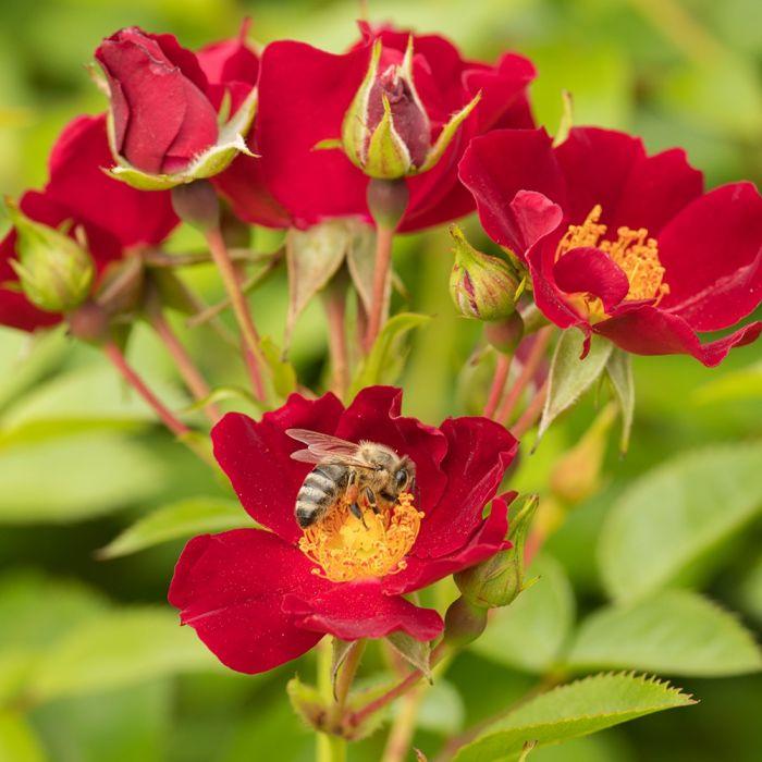 Lot de 5 Bijenweelde