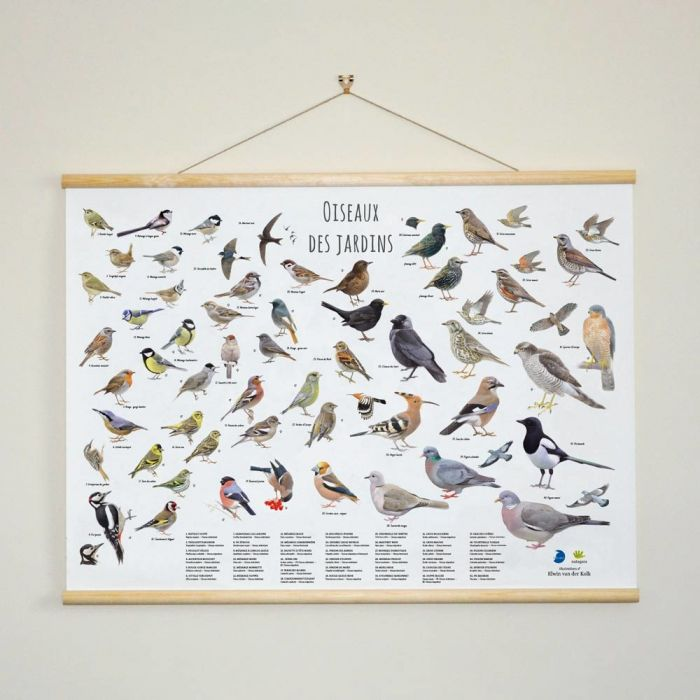 Poster oiseaux des jardins - Elwin van der Kolk